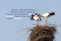 Покинуте гніздо